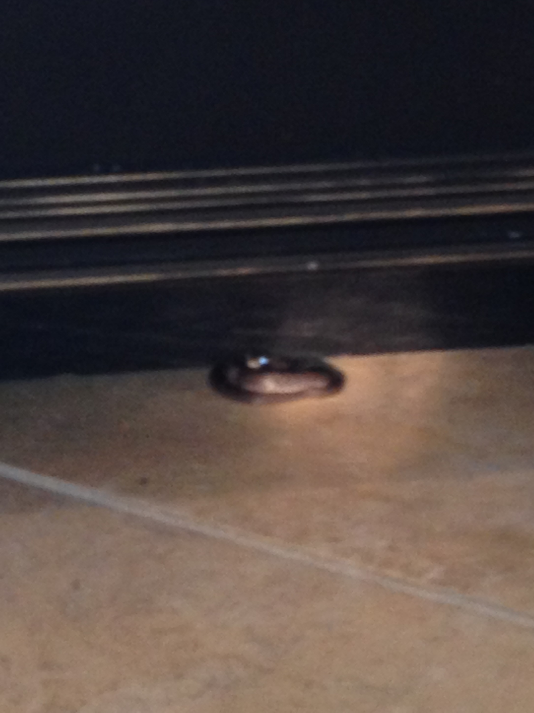 Here's the picture that my friend sent of the mystery snake in her house in Oviedo.  It was under an island in her kitchen, so it was hard for her to take a good picture.