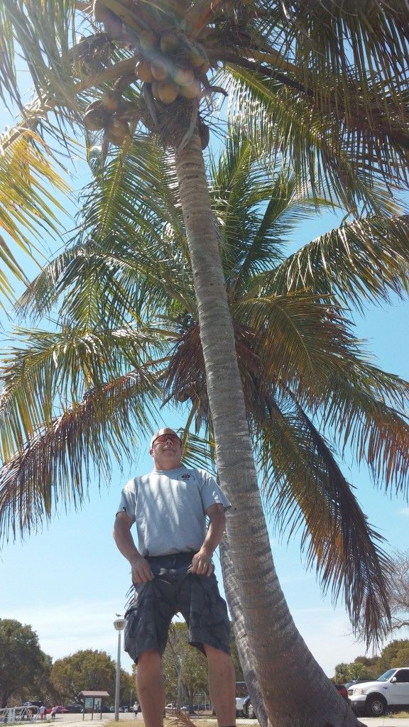 Ron standing bravely beneath the coconuts on a palm tree.  Coconuts can fall on you, causing serious injury or death!