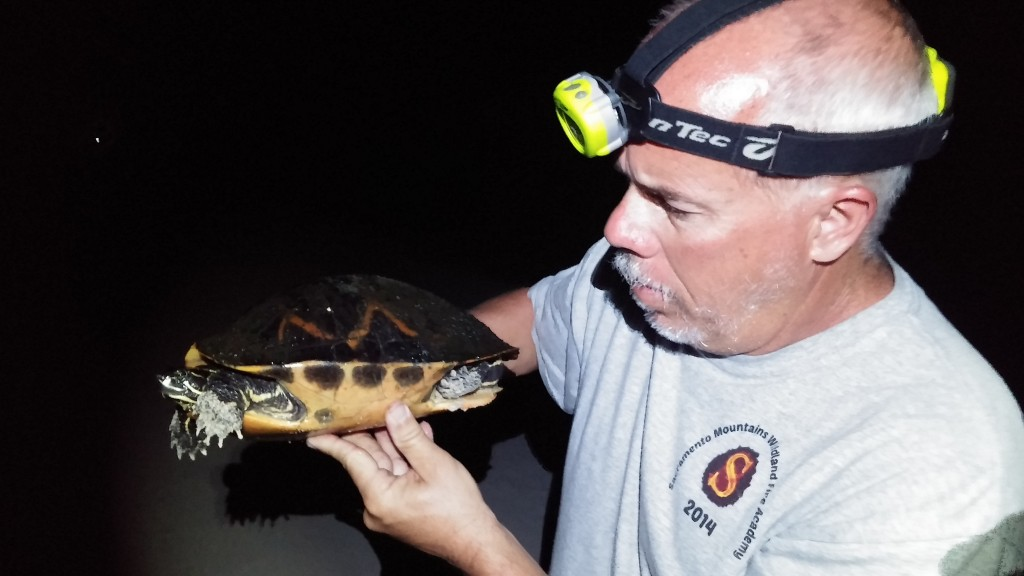 Ron holding a cooter.  I'm not sure which species, as many turtle species look very similar.  I would guess it is either a Red Bellied Cooter (Psudemys nelsoni) or a Florida Cooter (Pseudemys floridana).