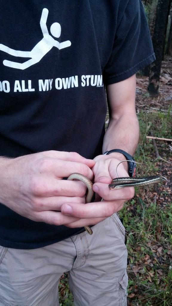Rhett holding a Ribbon Snake (Thamnophis sauritus).